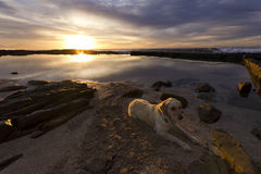 Chien d'arrêt sur la plage au lever de soleil Photos libres de droits