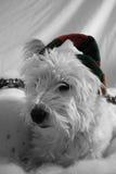 Chien d'Elf Photo libre de droits