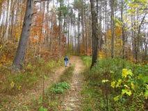 Chien d'homme marchant en bois Images stock