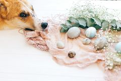 Chien d'or mignon détendant aux oeufs et aux fleurs de pâques élégants sur le fond en bois rustique dans la lumière Les oeufs de  image stock