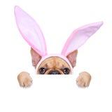 Chien d'oreilles de Pâques de lapin Photo stock