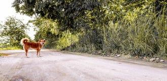 Chien d'un côté d'un chemin de terre dans Recife, Brésil photo stock
