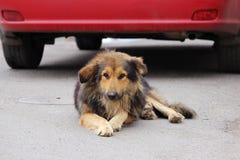 chien d'une chevelure hirsute égaré se trouvant près d'une voiture rouge sur l'asphalte Photographie stock