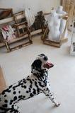 Chien dalmatien à l'intérieur de l'atelier artistique Images stock