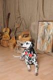 Chien dalmatien dans un noeud papillon rouge dans un intérieur rustique d'eco Photographie stock