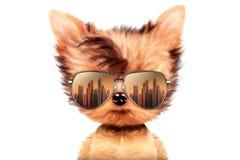 Chien dans des lunettes de soleil sur le fond blanc Photographie stock