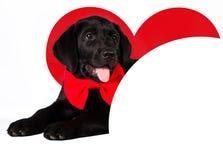Chien dans l'amour avec un coeur rouge et endroit pour le texte Photos libres de droits