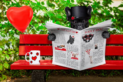 Chien dans l'amour se reposant sur un banc Images stock