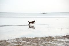 Chien dans l'eau photographie stock