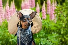 Chien dans l'image d'un agriculteur, un horticulteur, un cultivateur de fleur photographie stock