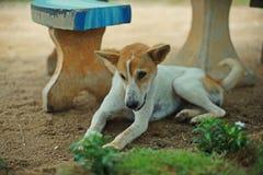 Chien dans la ferme Photographie stock libre de droits