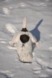 Chien dans la neige Photographie stock