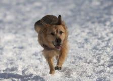 Chien dans la neige Images libres de droits