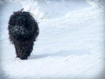 Chien dans la neige Photos stock