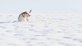 Chien dans la neige Photographie stock libre de droits