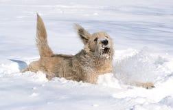 Chien dans la neige Image libre de droits