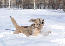 Chien dans la neige Images stock