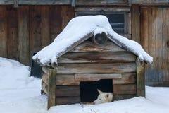 Chien dans la niche sous la neige image stock