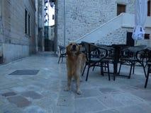 Chien dans la vieille ville de Kotor, début de la matinée montenegro Image libre de droits