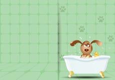 Chien dans le bain pour le toilettage Photographie stock libre de droits