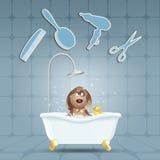 Chien dans le bain pour le toilettage Images stock