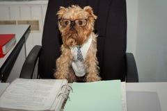 Chien - dans le bureau Image libre de droits