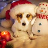 Chien dans le chapeau de Noël Image stock