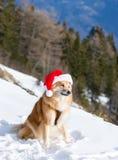Chien dans le chapeau de Noël Photos stock