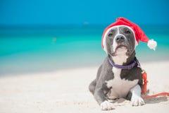 Chien dans le chapeau de Santa à la plage Images libres de droits