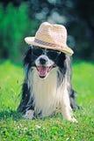 Chien dans le chapeau et des lunettes de soleil Photographie stock