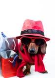 Chien dans le chapeau rouge élégant Photo stock