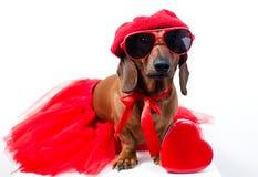 Chien dans le costume rouge à la mode Images stock