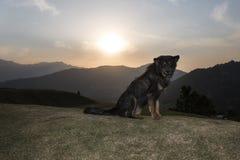 Chien dans le coucher du soleil Photo libre de droits