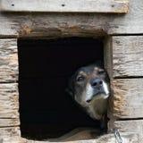 Chien dans le refuge pour animaux Photo stock