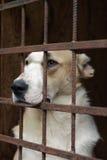 Chien dans le refuge pour animaux Photographie stock