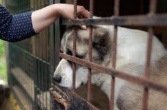Chien dans le refuge pour animaux Images stock