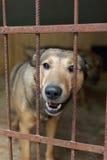 Chien dans le refuge pour animaux Image stock