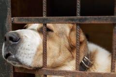 Chien dans le refuge pour animaux Photos libres de droits