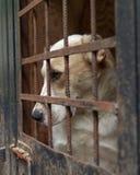 Chien dans le refuge pour animaux Photos stock