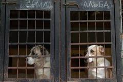 Chien dans le refuge pour animaux Photographie stock libre de droits