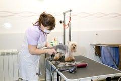 Chien dans le salon de toilettage d'animal familier photo stock
