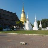 Chien dans le temple Photo libre de droits