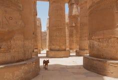 Chien dans le temple de Karnak Photo libre de droits