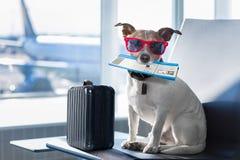 Chien dans le terminal d'aéroport des vacances Photographie stock libre de droits