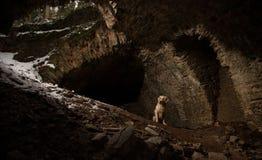 Chien dans le tunnel Image libre de droits