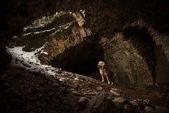 Chien dans le tunnel Photographie stock libre de droits