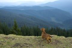 Chien dans les montagnes Photographie stock