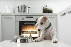Chien dans une cuisine photo stock