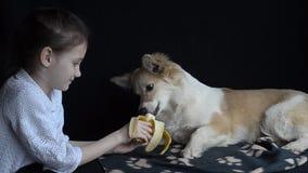 Chien de alimentation de fille une banane clips vidéos