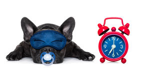 Chien de bébé d'endormi Photographie stock